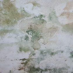 Schimmel von der Wand entfernen