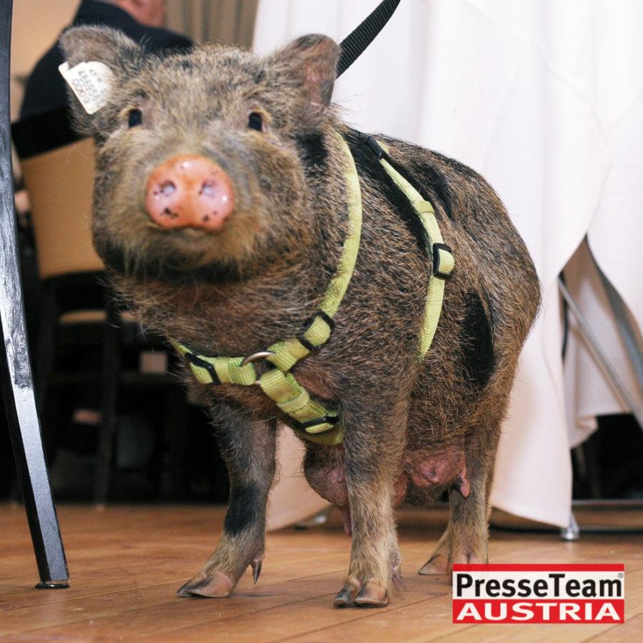 2DSC 2149 Tierschutzpreis Kärnten - Verleihung des ersten Tierschutzpreises