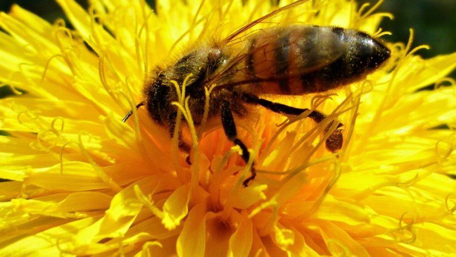 Unterschriftenaktionen zum Schutz der Bienen