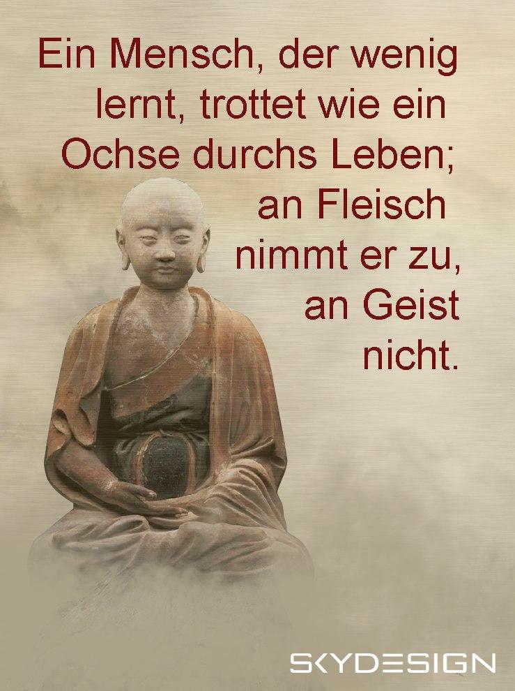 Ein Mensch der wenig lernt trottet wie ein Ochse durchs Leben an Fleisch nimmt er zu an Geist nicht Buddha - Die beliebtesten 20 Buddha Zitate & Sprüche
