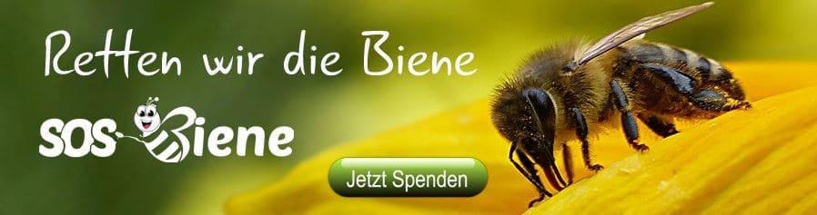 1 Million Blühstreifen für die ganze Welt mit SOS Biene